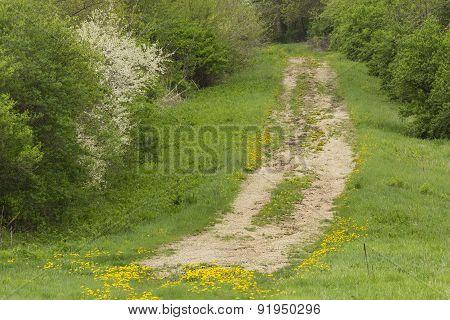 Rural Field Road