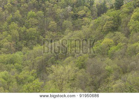 Spring Tree & Hills