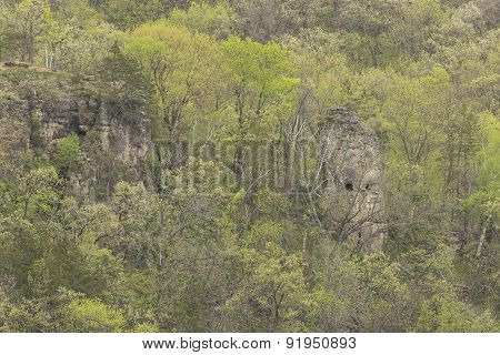 Spring Trees & Rock Formation
