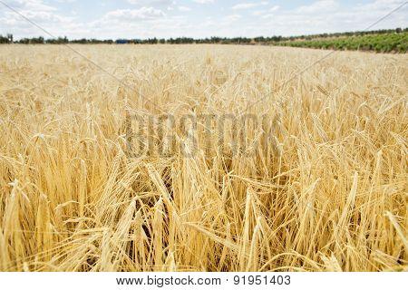 Narley Field