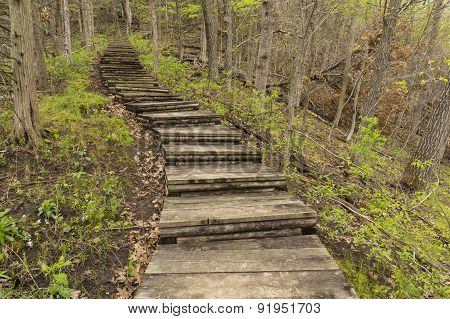 Step Trail In Woods