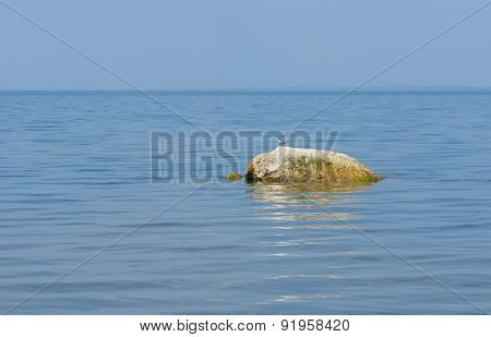 River scenery - stone and common tern bird