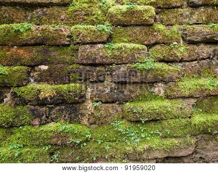 Brick walls weeds