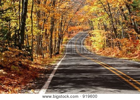 Road Through Maple Trees