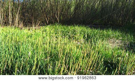 Snake Grass Meadow
