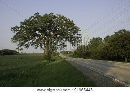 Oak Tree Road