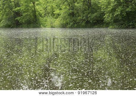 Foam Spot Water