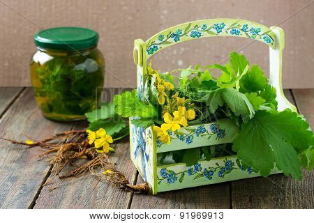 Medicinal Plants - Celandine, And The Infusion Of Herbal