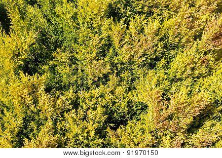 Green Vegetation Cover