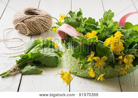 Preparation Of Medicinal Plants - Celandine For Drying
