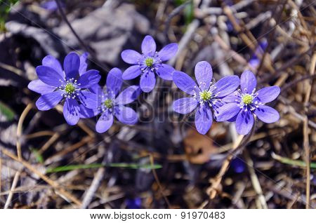 Five blue wildflowers