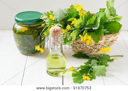 Celandine Herbs, Tincture And Oil Herbal