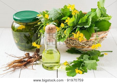 Celandine, Oil, Tincture And Roots For Herbal Medicine
