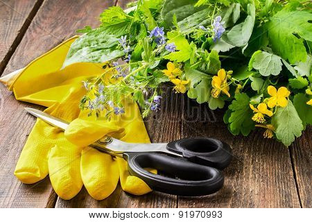 Fresh Cut Plants For Herbal Medicine