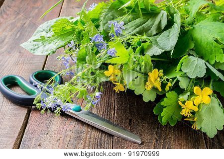Fresh Collected Medicinal Herbs