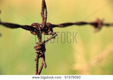 Barbed wire have old and green background