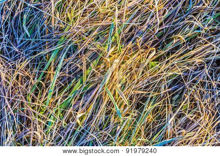 Closeup Of Green Frozen Grass In The Late Fall
