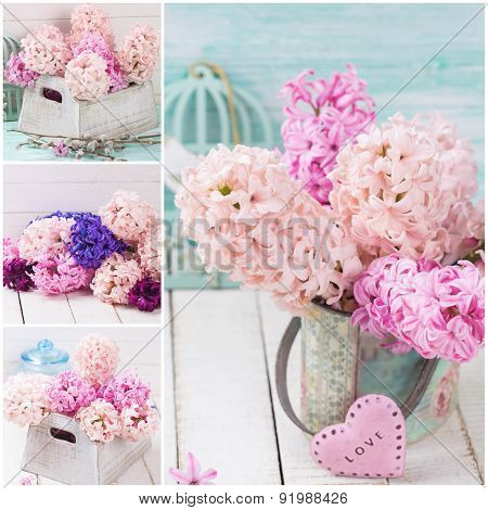 Collage  With Fresh Flowers Hyacinths