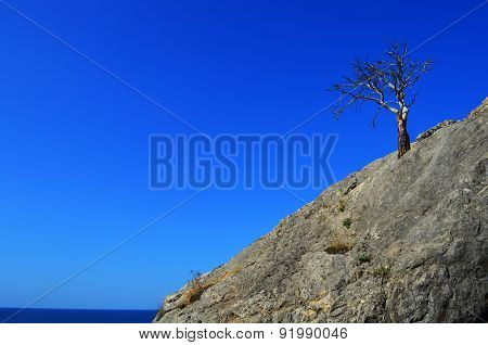 lonely tree on the rock