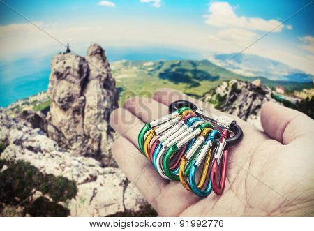 Colorful Carabiner Climbing On A Palm