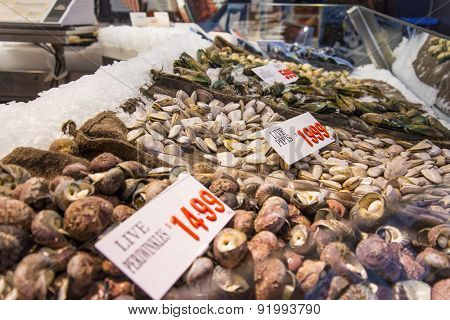 Seashells On The Market