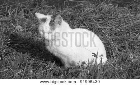 white cat in BW