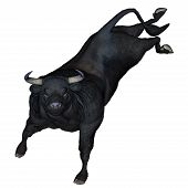 picture of buck  - Bull bucking isolated in white background - JPG