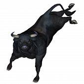 pic of  bucks  - Bull bucking isolated in white background - JPG