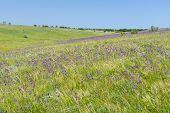 image of steppes  - Landscape with wild Ukrainian steppe at spring season - JPG