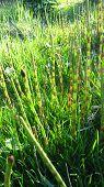 image of marshes  - Fresh green marsh grass - JPG