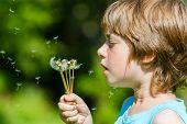 picture of blowing  - Kid blowing dandelion outdoor on sky background - JPG
