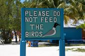 image of palm-reading  - Signage reads a warning to please do not feed the birds to discourge them - JPG