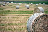 image of hay bale  - Hay bale in a field with other bales - JPG