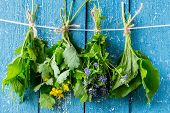 stock photo of plantain  - Herbs in bunches  - JPG