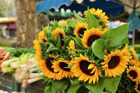 picture of farmer  - Farmers market in France with vegetables and sunflowers. ** Note: Shallow depth of field - JPG