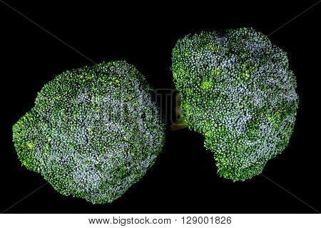 Fresh Broccoli isolated against a black background
