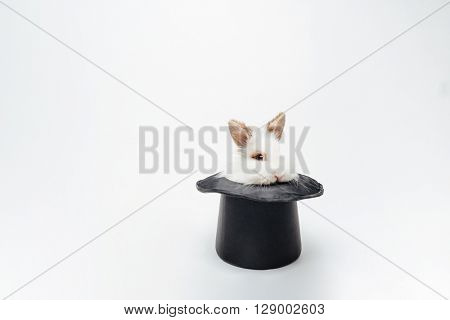 Funny rabbit in a hat isolated on a white background