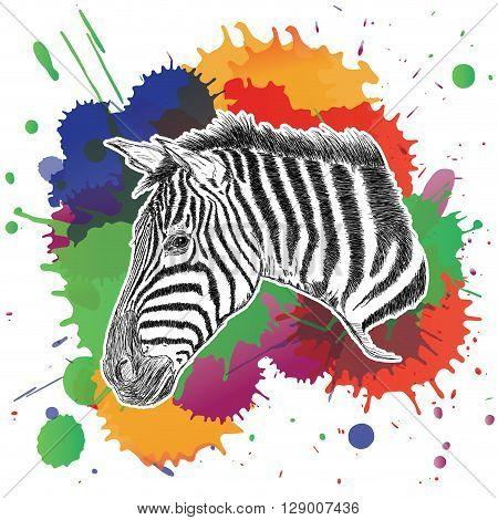 Zebra with Colorful Ink Splashes Vector Illustration