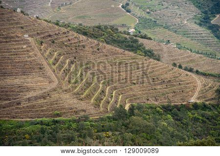 Vineyard hills in the river Douro valley, Portugal, Europe