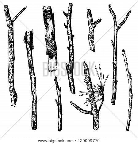 vector set of ink drawing wood twigs, isolated hand drawn nature objects, tree branches, sticks, hand drawn vector illustration