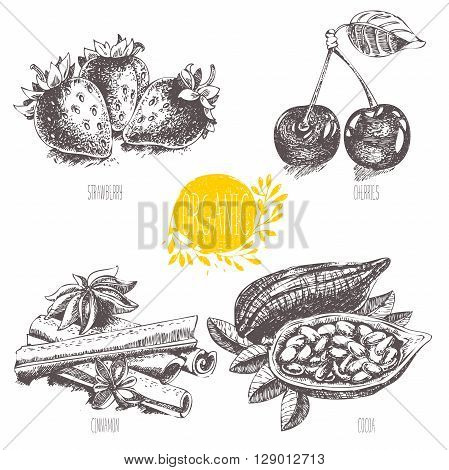 Series - vector fruit, vegetables and spices. Hand-drawn illustration in vintage style. Sketch. Healthy food. Linear graphic. Set of strawberry, cherry, cocoa, cinnamon.