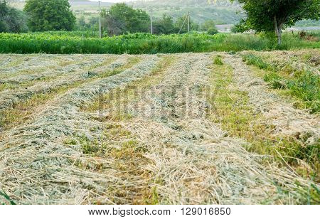 Rows of freshly mown hay horizon, land,