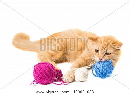 cat isolated on white background, looking, anticipation,