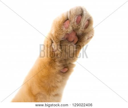 cat paw isolated on white background relax, beauty, lovely, home, comfortable, p