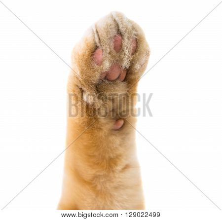 cat paw isolated on white background adorable, relax