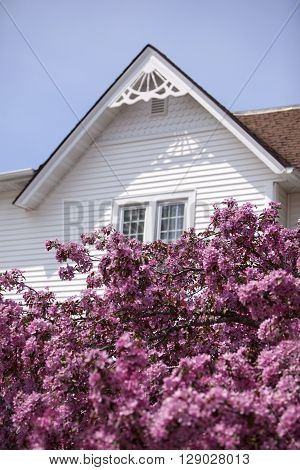 White home gable and pink crab tree flowers.