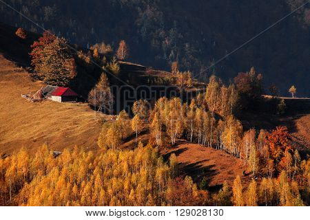 Autumn forest colours in the Carpathians, Romania, Europe