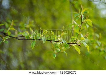 Macro photography of beautiful springtime nature details