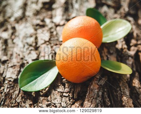 Two Oranges are on the Tree's Stump with Green Leaves,Nature Background,Spring Toned,Selective Focus