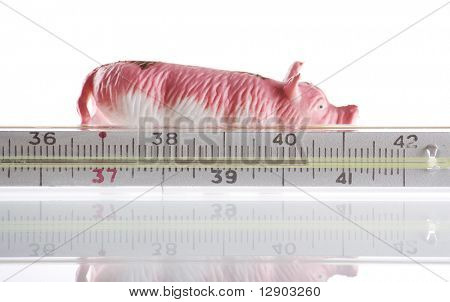 epidemic of piggy flue